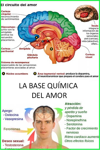 base-quimica-amor